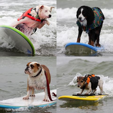 090623_dogs2.jpg