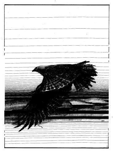 Image (69)